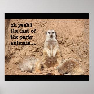 poster engraçado do meerkat, animal de partido!