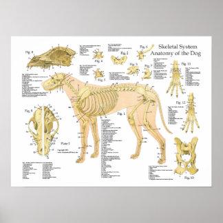 """Poster esqueletal 18"""" da anatomia do cão X 24"""" Pôster"""