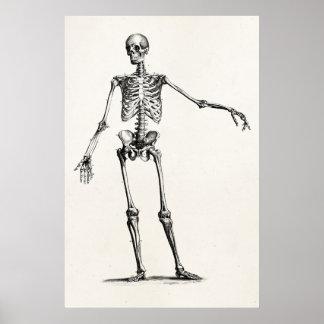 Poster Esqueletos retros de esqueleto da anatomia dos