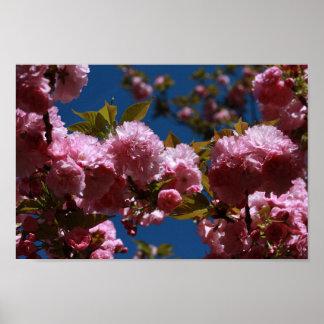 Póster Explosões da flor de cerejeira