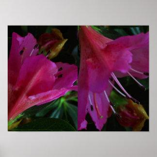 Póster Flor cor-de-rosa do botão: Arte sensual romântica