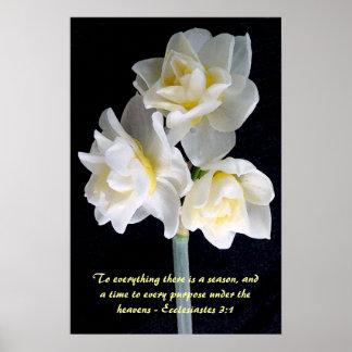 Poster Flor de Jonquil - 3:1 de Ecclesiastes