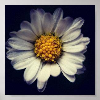 Poster flor de oca