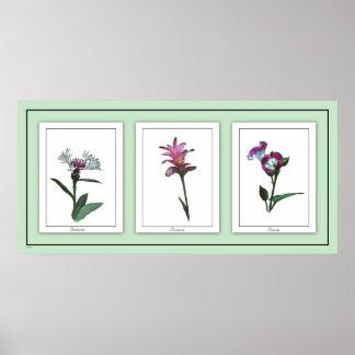 Poster floral do trio botânico