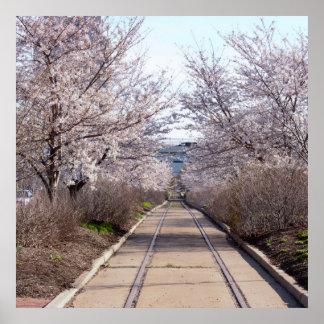 Póster Flores de cerejeira e trilhas Philadelphfia
