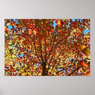 Poster Fogos-de-artifício das folhas de outono