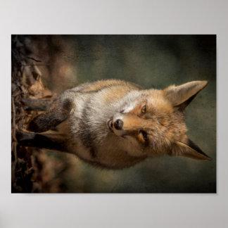 Póster Fox