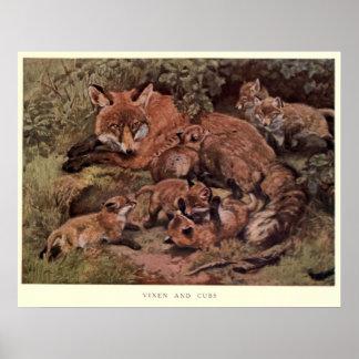 Póster Fox do vintage e Cuba Pintura (1909)