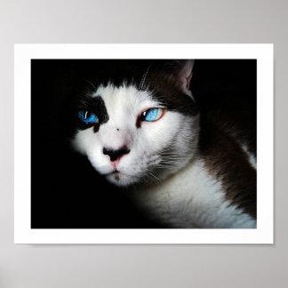 Poster Gato CCO