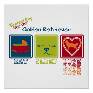 Poster Golden retriever
