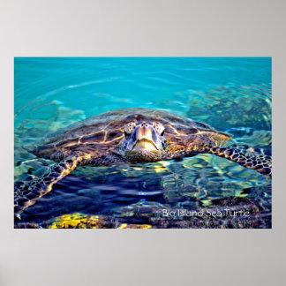 Poster grande da tartaruga de mar da ilha