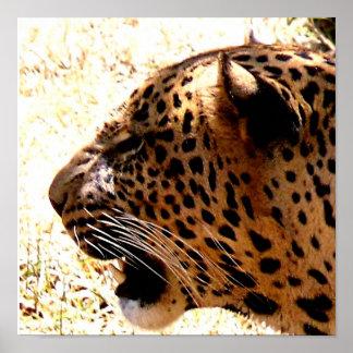 Poster Home africano da decoração do leopardo