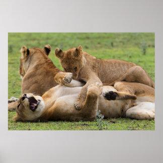 Poster Jogo dos clubes de leão