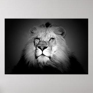 Póster Leão - fotografia do animal selvagem