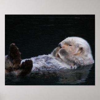 Poster Lontra de mar bonito