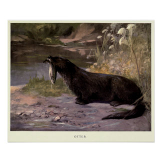 Póster Lontra Pintura do vintage (1909)