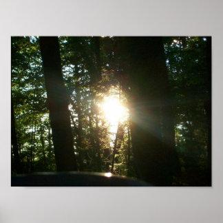 Póster Luz solar através das árvores