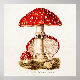 Poster Modelo dos cogumelos do vermelho do cogumelo dos