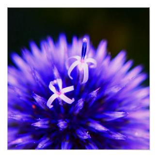 Póster Natures Magic - Purple