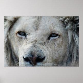 Poster O leão escuta minha pulsação do coração África