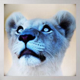 Poster Olhar branco do leão do fim da surpresa acima