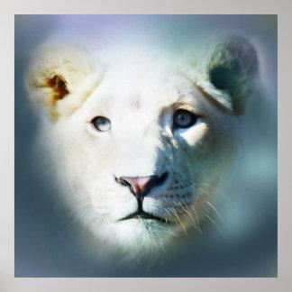 Póster Olhos azuis brancos do leão de África