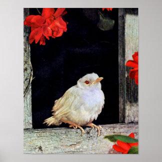 Poster Pássaro RARO do pisco de peito vermelho do albino
