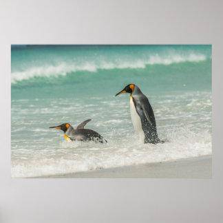 Poster Pinguins que nadam na praia