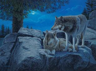 Pósteres E Impressões Lobos Bonitos Zazzlept