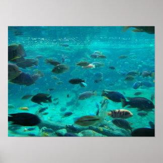 Póster Piscina azul das cichlidaes que nadam em torno do