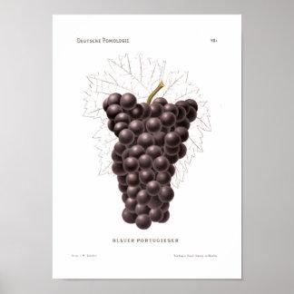 Poster preto das uvas