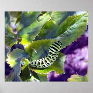 Poster preto de Swallowtail Caterpillar 2