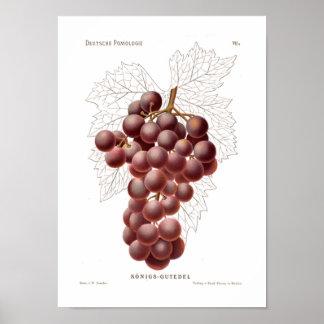 Poster roxo das uvas
