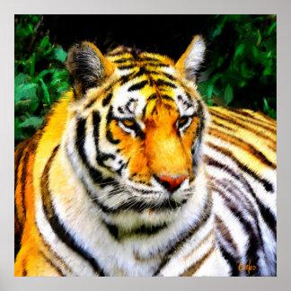 Póster Tigre do jardim zoológico de Oakland