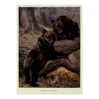Poster Urso de Brown Pintura do vintage (1909)