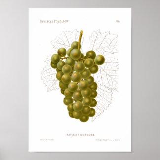 Poster verde das uvas