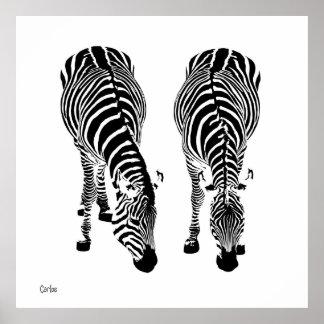 Póster Zebras