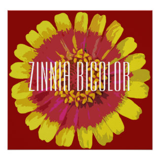 Poster Zinnia bicolor - canvas