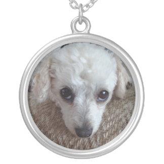 Pouco cão de caniche branco do Teacup Colar Banhado A Prata