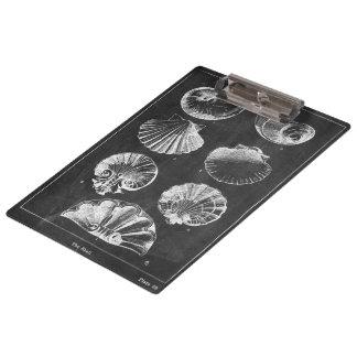 Pranchetas seashells botânicos franceses litorais do quadro
