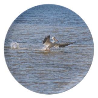 Prato Aterragem do pelicano