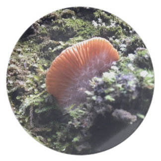 Prato Cogumelo tormentoso da explosão dos Mycelia