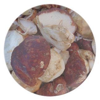 Prato Cogumelos de Porcini