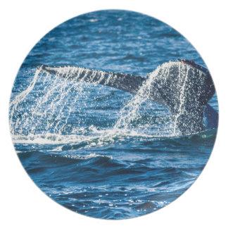 Prato De Festa Estado de Washington da baleia de Humpback