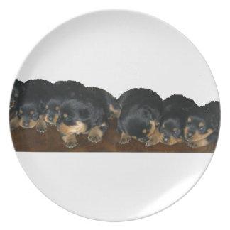 Prato De Festa filhotes de cachorro do rottweiler
