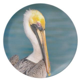 Prato De Festa Fim do retrato do pelicano acima com o oceano no