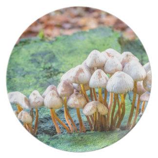 Prato De Festa Grupo de cogumelos no coto de árvore verde