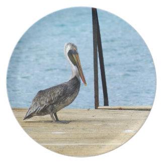 Prato De Festa Pelicano no cais, Curaçau, ilhas das Caraíbas