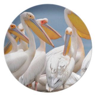 Prato De Festa Um rebanho dos pelicanos