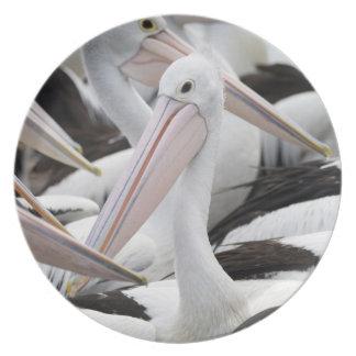 Prato De Festa Vagem dos pelicanos